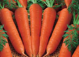manfaat wortel untuk kesehatan tubuh